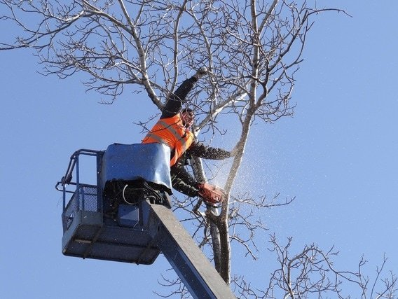 Tree Service, Removal & Trimming in Indianapolis - Home